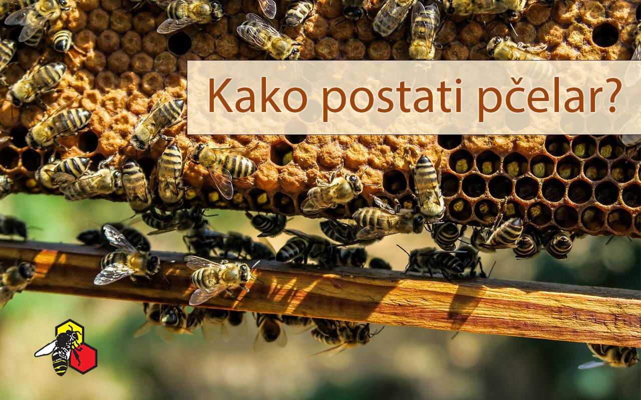 Kako postati pčelar? (ili što vam je sve potrebno za jedan dobar početak u pčelarstvu)